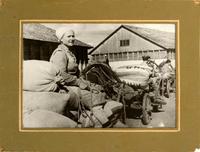 Фото. Вывоз хлеба. Буинский район. 1941-1945