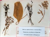 Цветы, привезенные с могилы Нуха Идрисова. Карелия. 1970-е