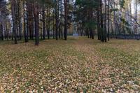 Японское кладбище, Елабуга, Тугарова