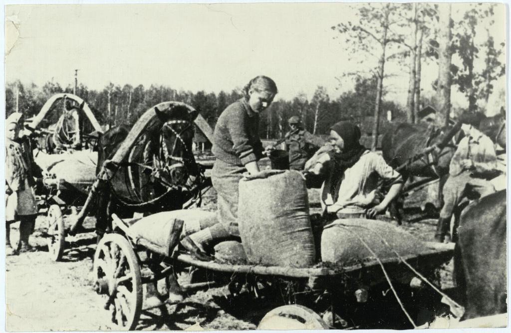 Фото №92984. Фото. Сдача хлеба государству. 1943  На ссыпном пункте Высокогорского района ТАССР